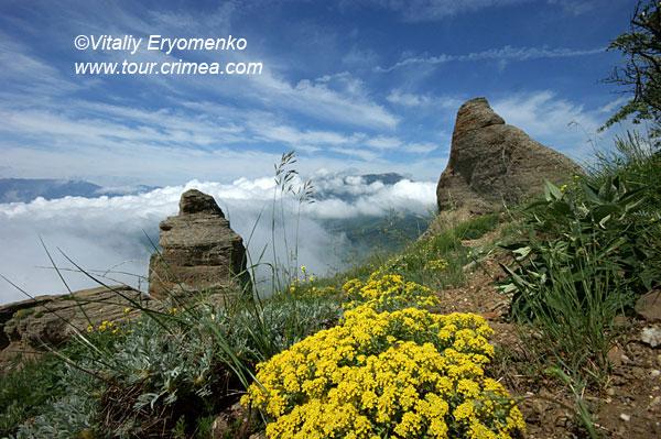 Встреча цветущего крымского лета на горе Демерджи - фоторепортаж.