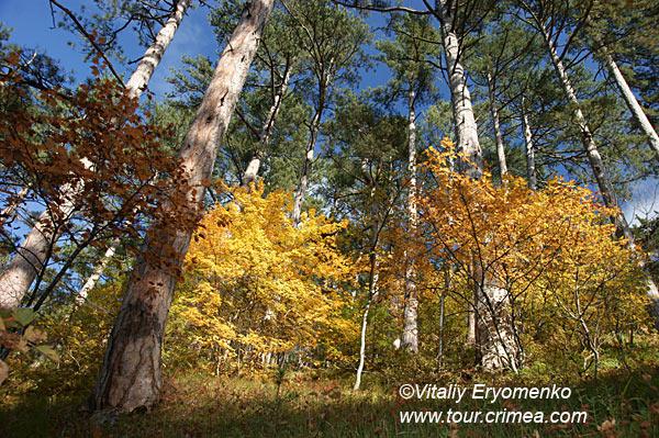 Золотая осень в живописном ущелье Уч-Кош над Ялтой - фоторепортаж