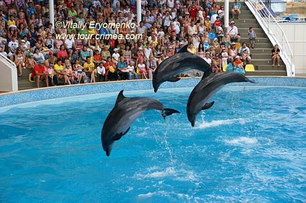 Дельфинарий в Коктебеле и Карадагский дельфинарий (на биостанции) – фоторепортаж.