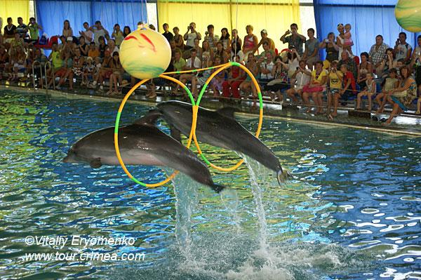 Экскурсия в Партенитский дельфинарий – фоторепортаж
